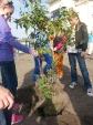 Sadzimy roślinki_3