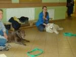 Dogoterapia - kolejne spotkanie foto